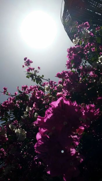 Light And Shadow No Filter EyeEm Nature Lover Nature Beautiful Day Sublime Paysage EyeEm Best Shots West Indies Flowers Natural Light And Shadow Effect