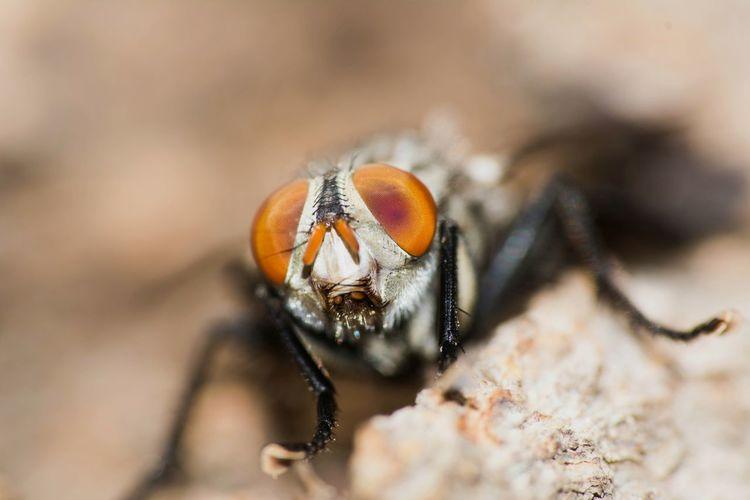 Macro Insects  Macroclique Extreme Macro Closeup Picoftheday Macro Photography Hugging A Tree