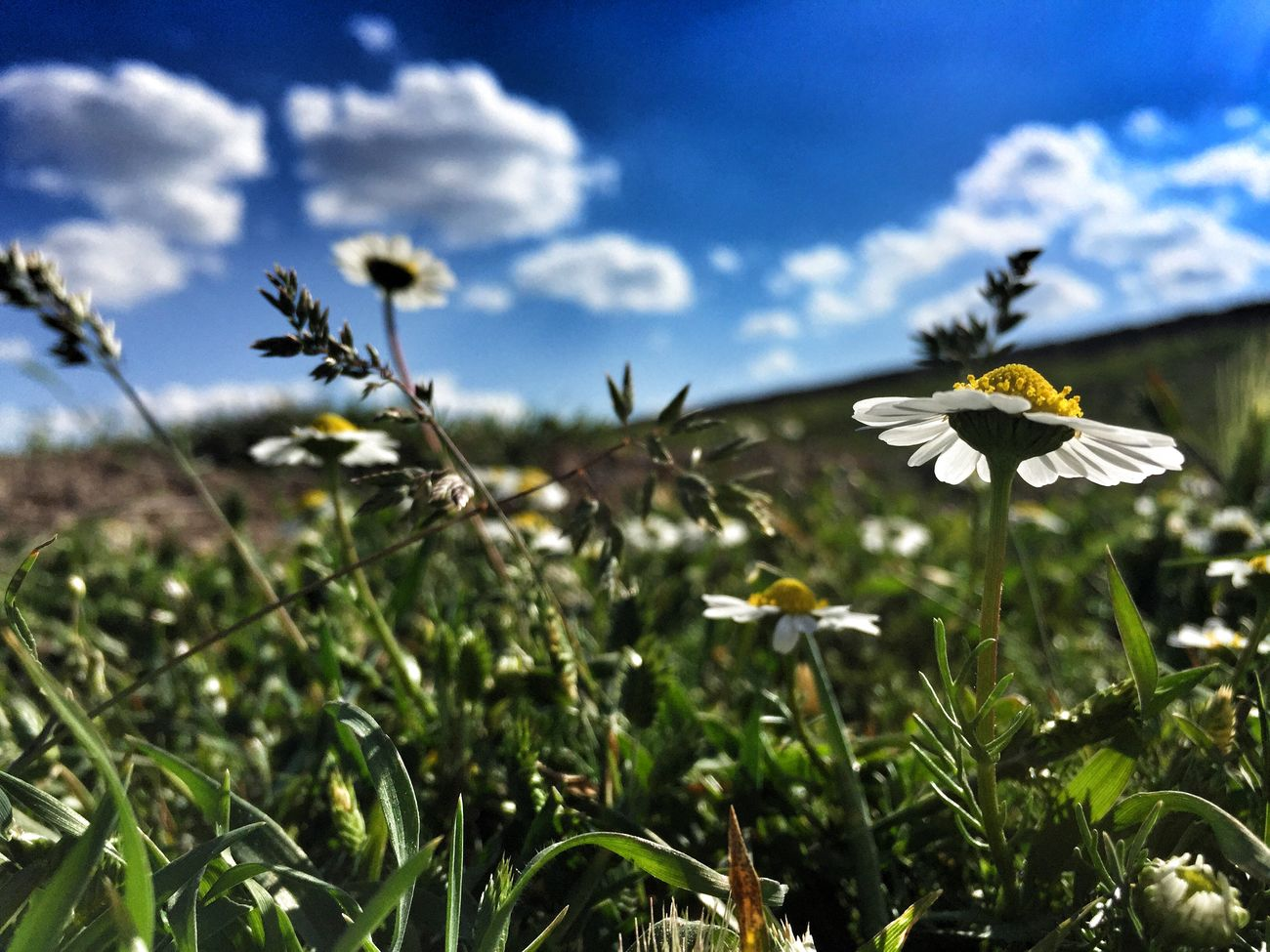South Daisy Daisys Daisy Flower Daisydream Spring Spring Flowers Relaxing Nature Photography Check This Out