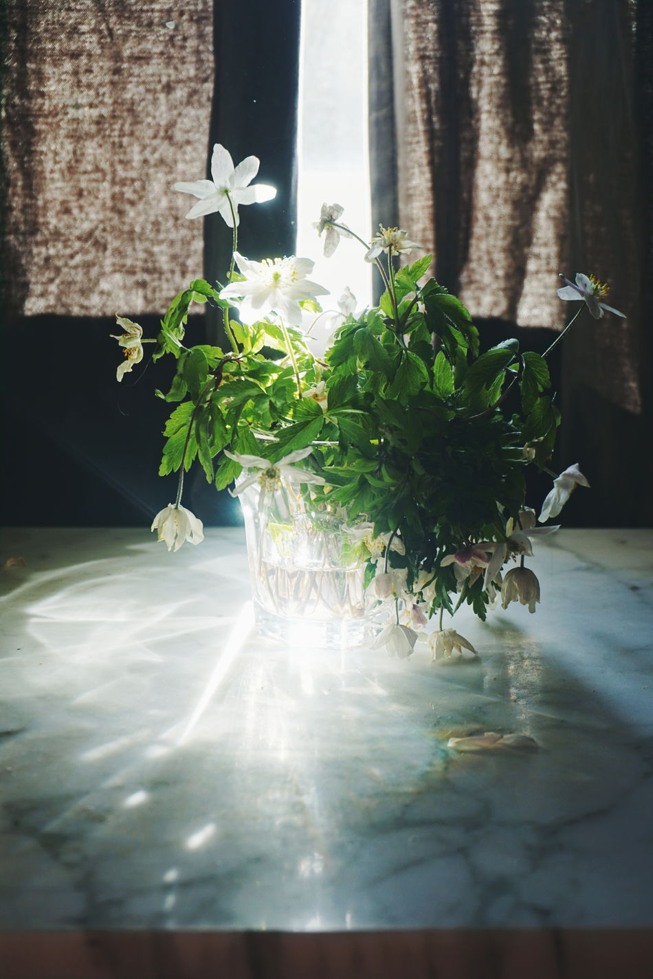 Morning light Close-up Day Flower Freshness Growth Indoors  Leaf Light Morning Morning Light Nature No People Plant Shadows & Lights Spring Flowers Sunbeam Sunlight Sunlight And Shadow Window Wood Anemone