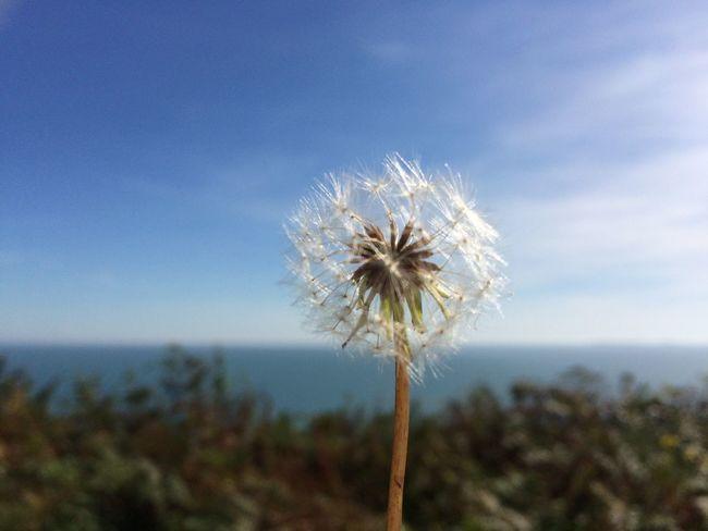 Marros Wales Summer ☀ Blue Sky Nature