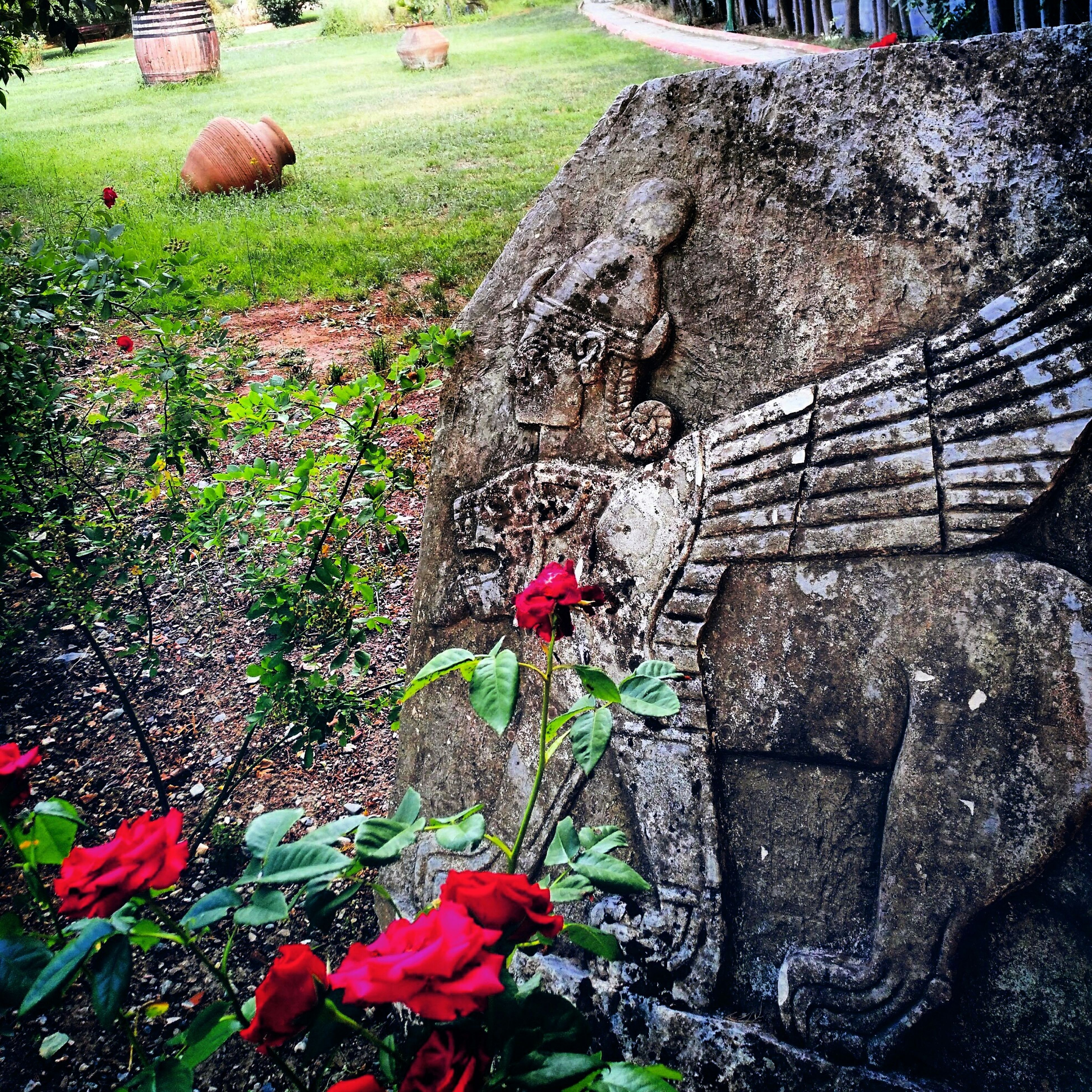 flower, grass, plant, growth, field, nature, park - man made space, freshness, beauty in nature, day, green color, outdoors, fragility, sunlight, formal garden, blooming, rock - object, petal, high angle view, tranquility
