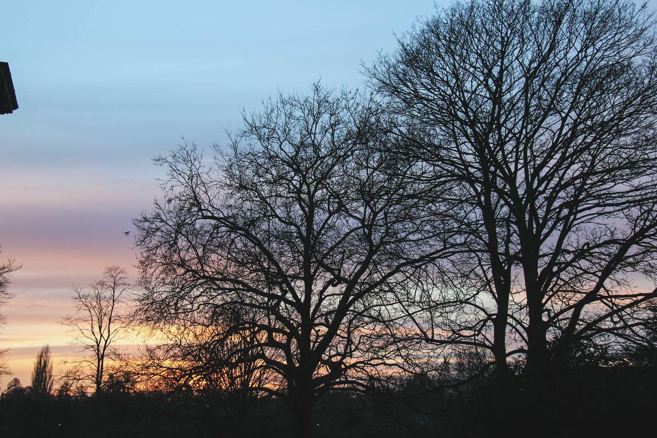 Sunset Taking Photos Trees Cambridge Uk United Kingdom Cambridgeshire Winter Skyporn Sky And Trees Sky