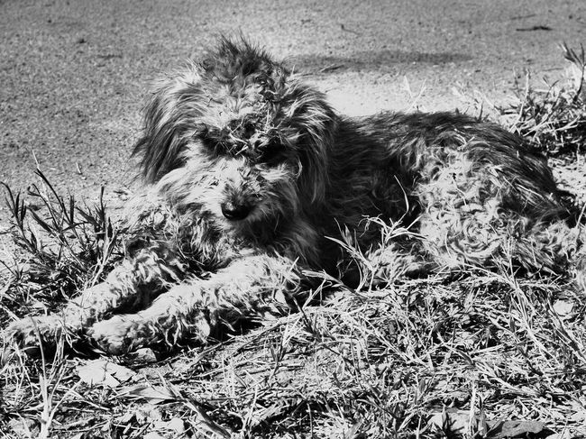 Dog Dogs Dogslife Dogs Of EyeEm Dog Love Dogoftheday Dog Portrait Dog Of The Day Blackandwhite Blackandwhite Photography Black And White Portrait Chiang Dao Spotted In Thailand