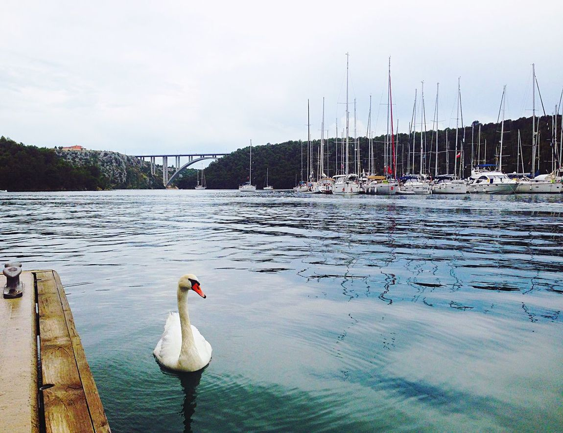 Bird Animals In The Wild Nautical Vessel Lake Nature Sea Water Animal Themes Beauty In Nature Swan Jetty Skradin Krka National Park Croatia