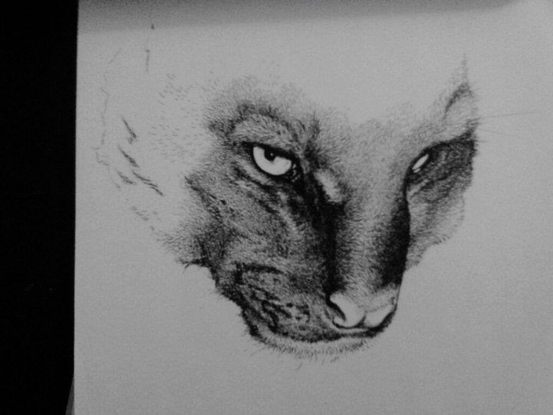 Sketches ArtWork Drawings Drawing my Jaguarundi