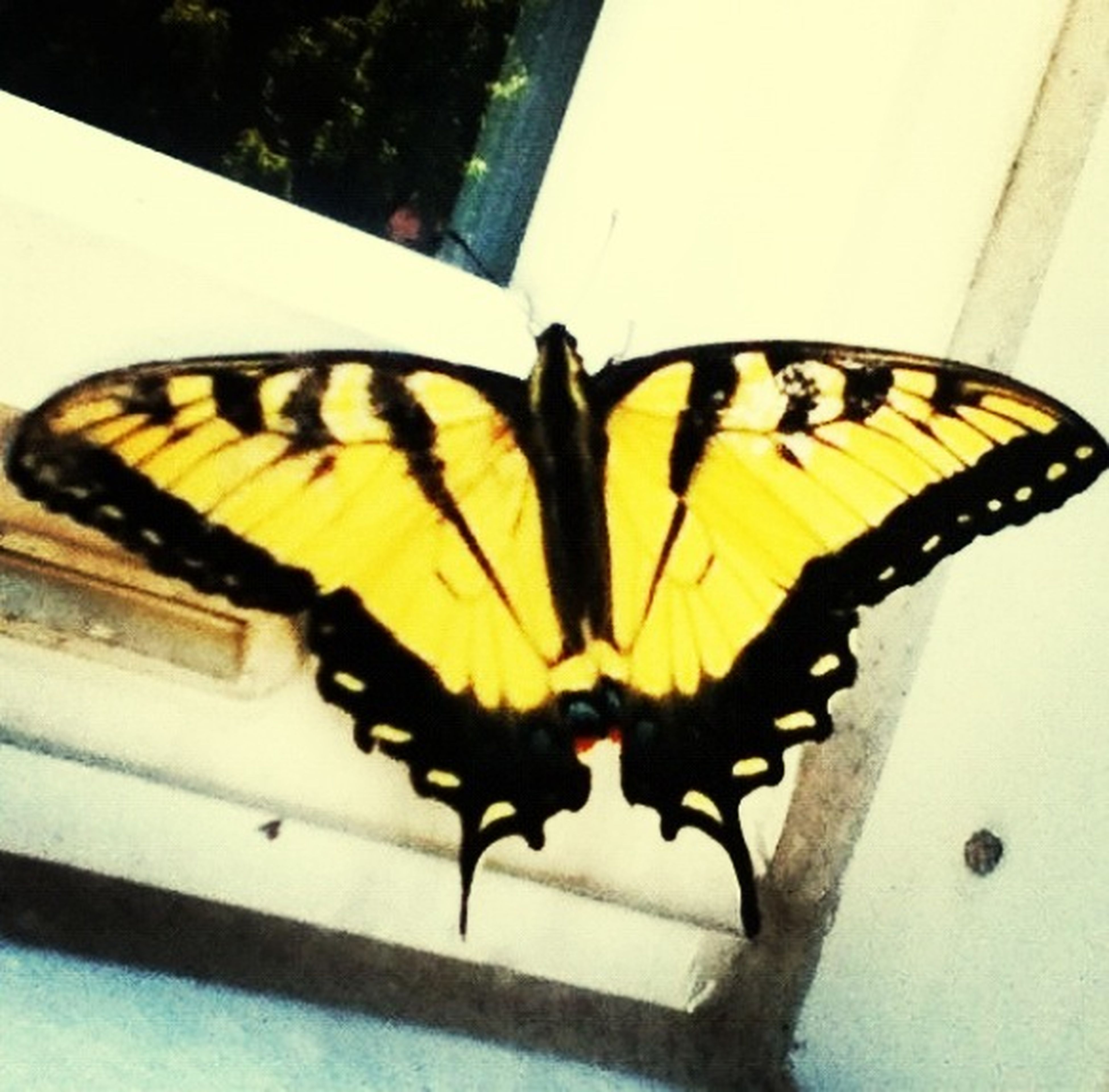 insect, animal themes, animals in the wild, one animal, wildlife, butterfly - insect, yellow, animal markings, butterfly, animal wing, perching, close-up, full length, spread wings, focus on foreground, nature, no people, natural pattern, day, outdoors