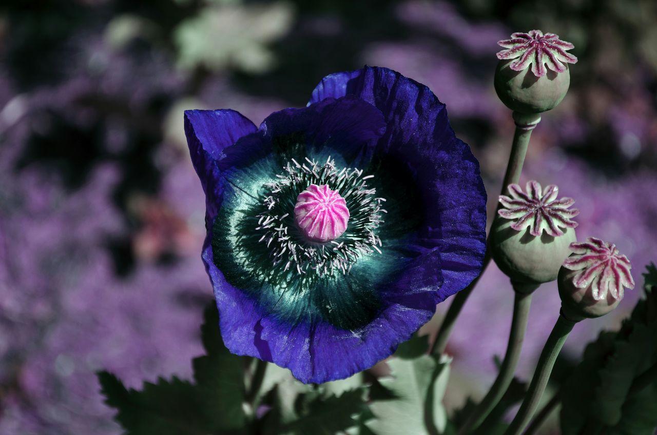 EyeEmBestPics Garden Photography Flowers Bremen - Woltmershausen EyeEm Best Shots