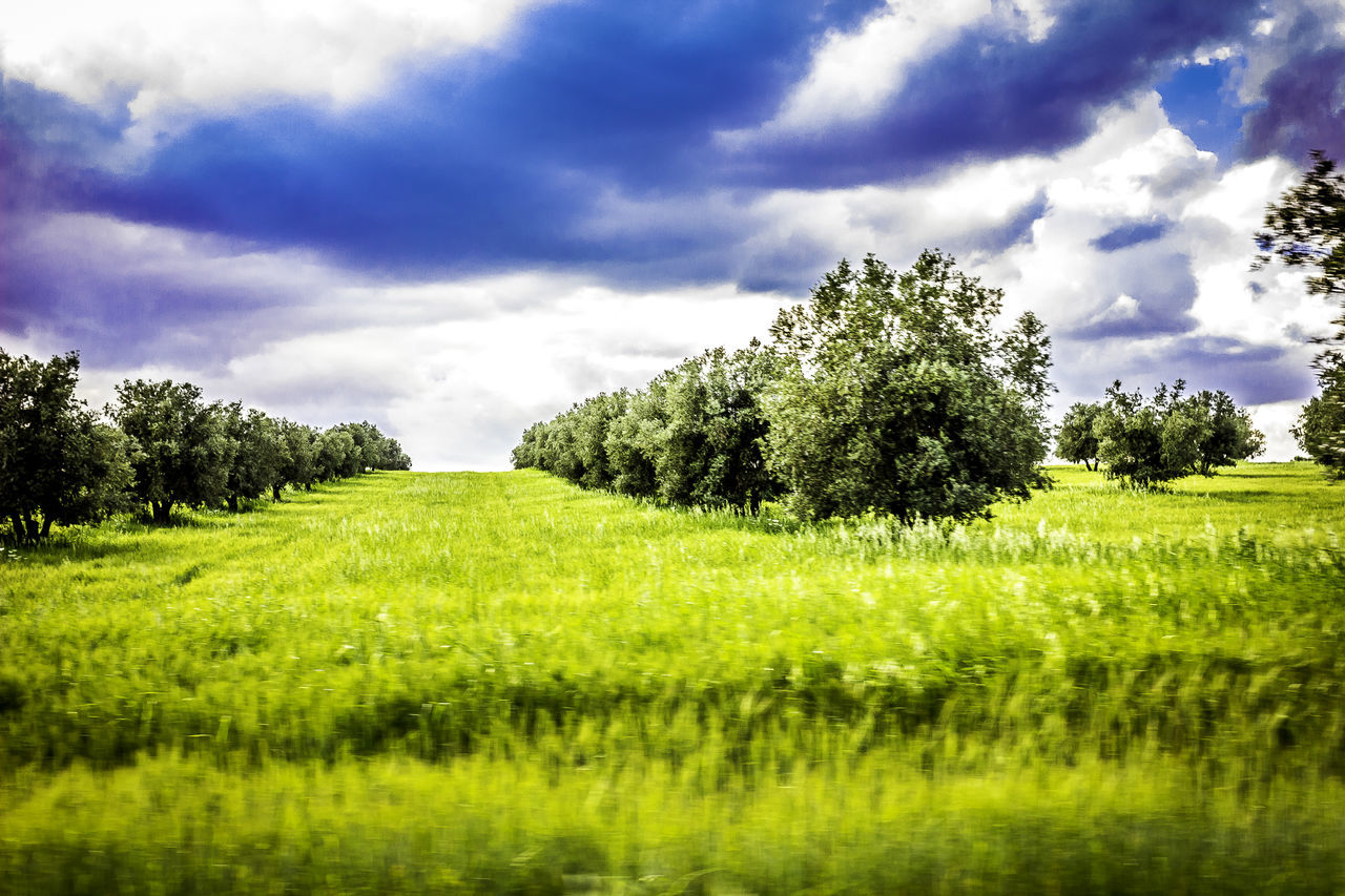 tree, green color, cloud - sky, nature, field, tranquility, tranquil scene, growth, sky, beauty in nature, grass, scenics, landscape, green, day, no people, agriculture, outdoors, idyllic, rural scene