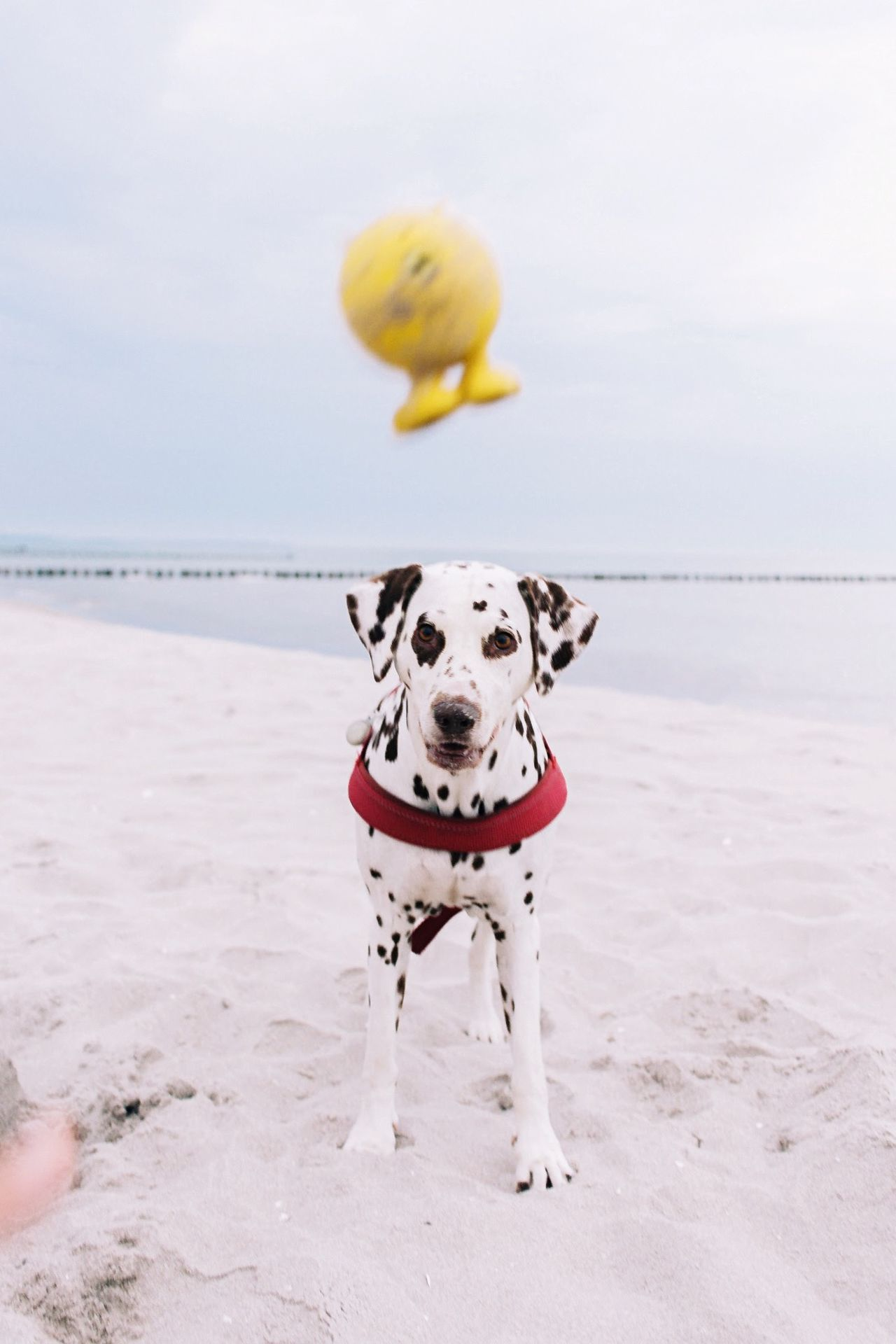 Beautiful stock photos of sand, , Animal Themes, Anthropomorphic, Balloon