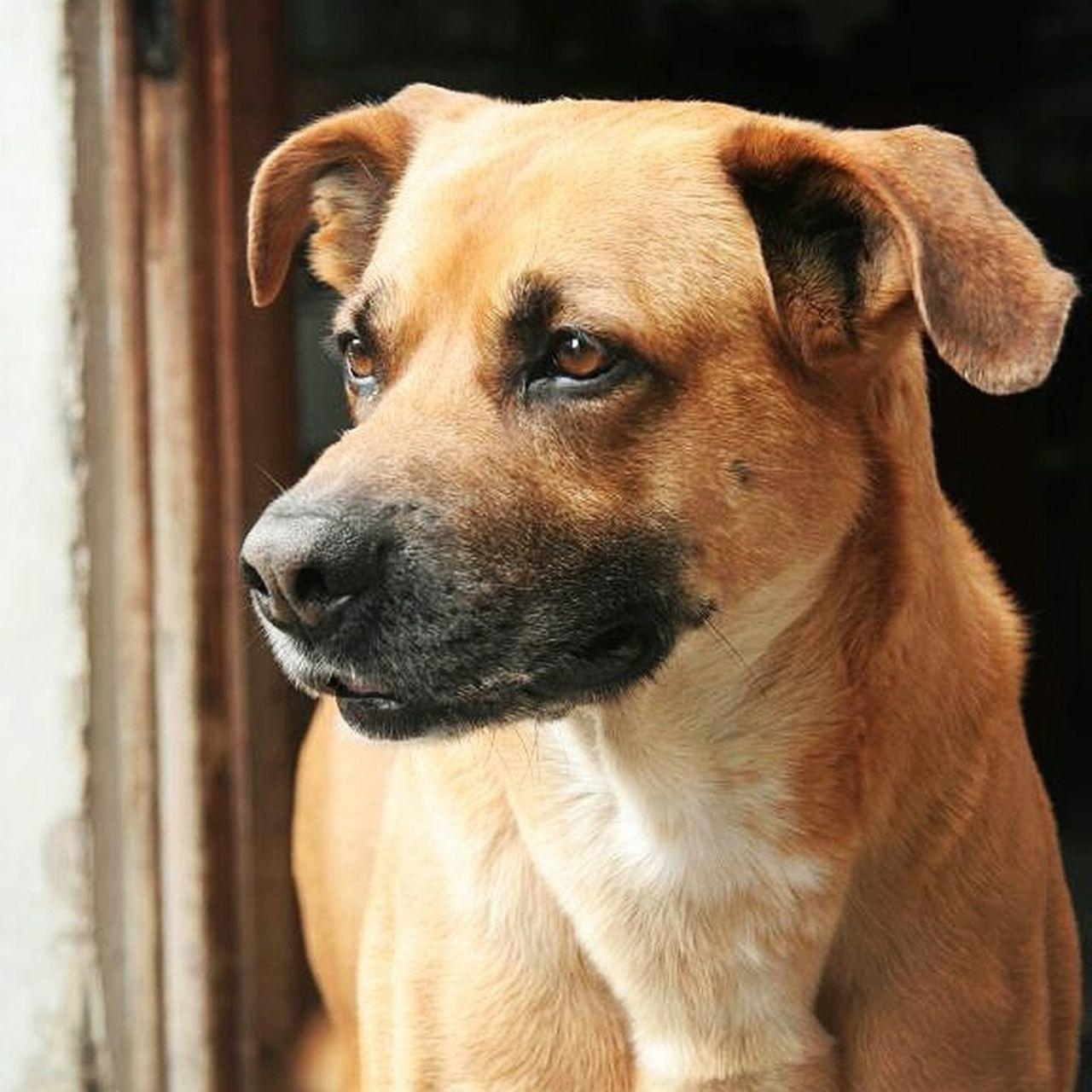 Pets Petfriends Dogs Dog Love Friends Dogfriends Nofilter Canon