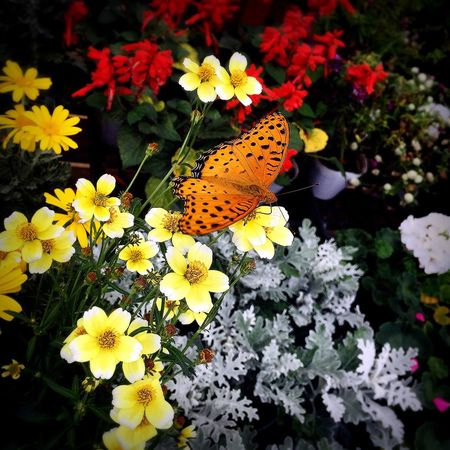 Flower Butterfly - Insect Beauty In Nature 色のある世界 Day Beauty In Nature