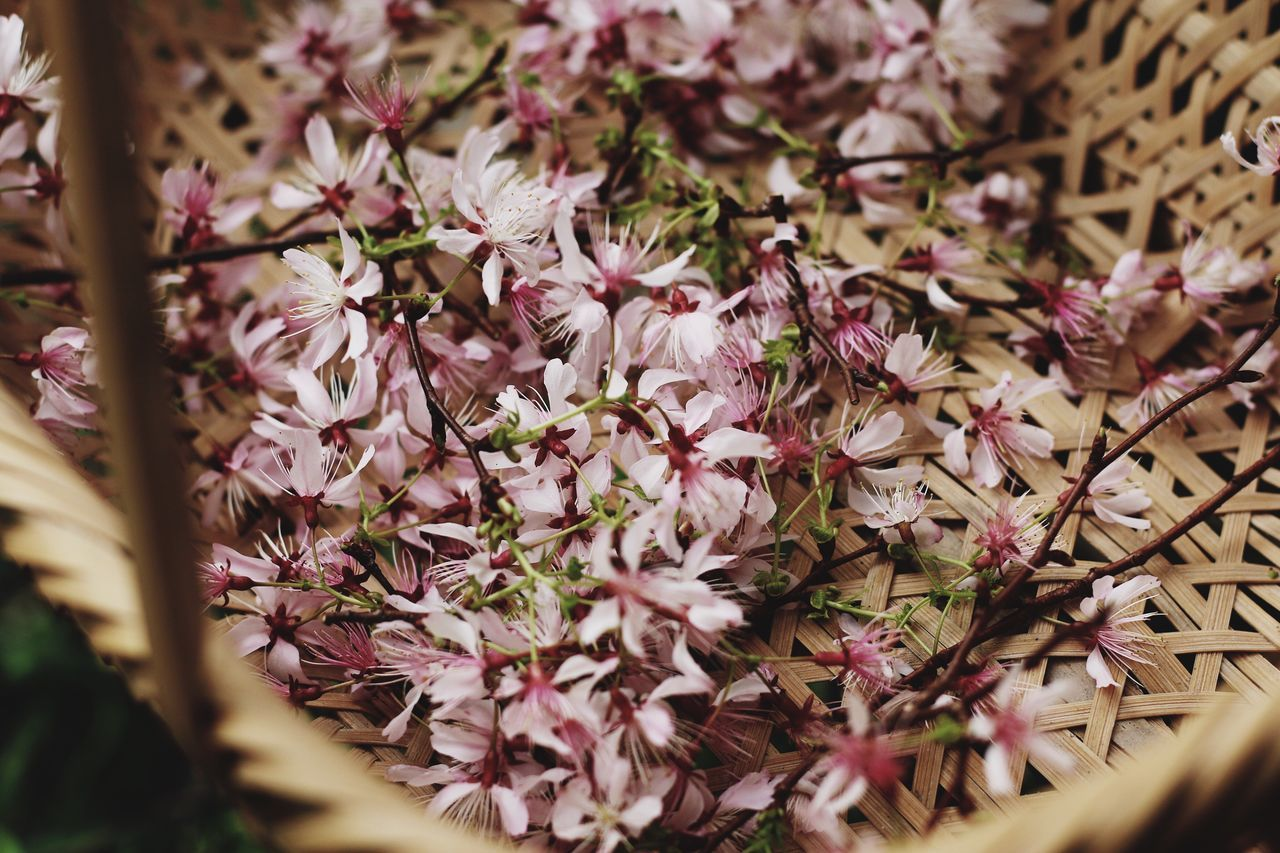 Sakura Flower Nature Freshness Growth Beauty In Nature Fragility Pink Color Close-up Day Petal No People Outdoors Flower Head Plant Tree Backgrounds Close Up Flower Collection Wildflower Wildlife & Nature From My Point Of View EyeEmNewHere EyeEm Gallery Beautiful Nature