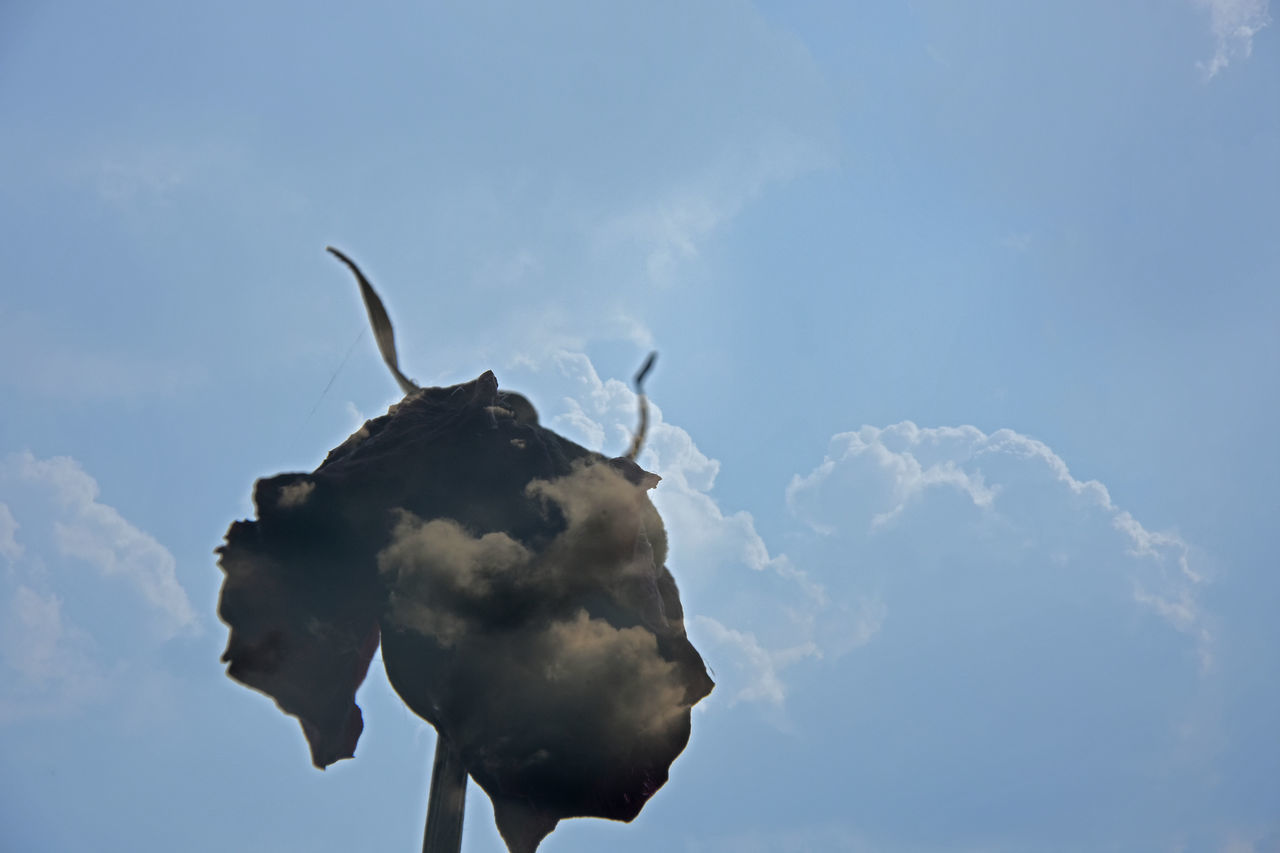 cloud - sky, sky, low angle view, day, no people, outdoors, nature, animal themes, close-up