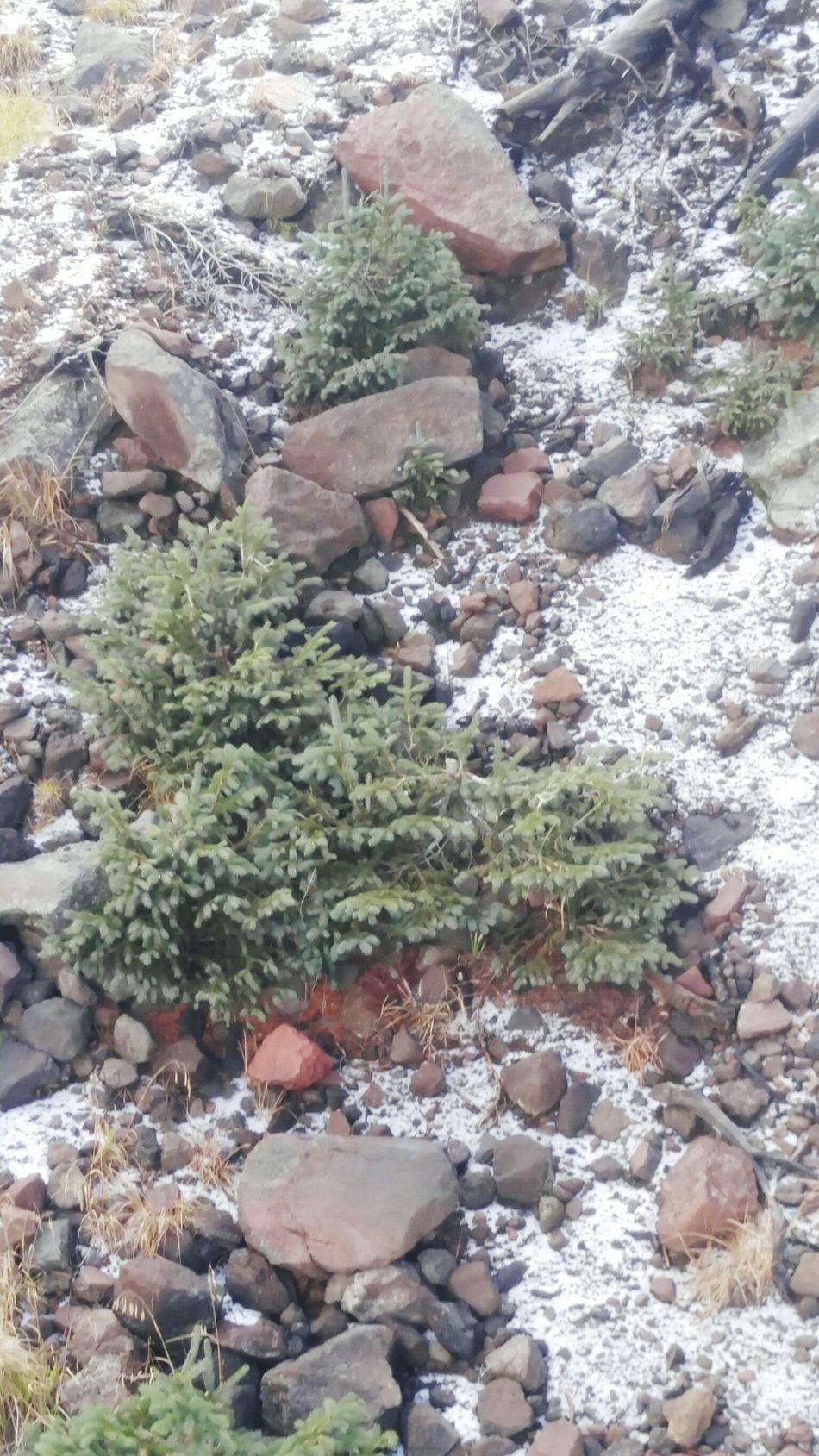 Snow ❄ October Flagstaff Mountain Flagstaff, Az