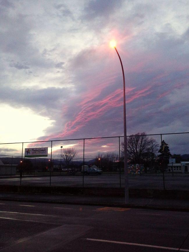 Saw this beauty during my sunday morning walk Upper Hutt Wellington  EyeEm Best Shots Good Morning New Zealand
