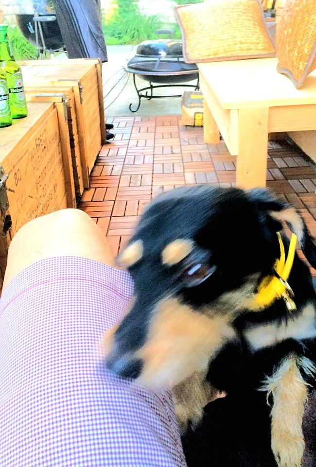 犬 いぬ いぬ ビゴ ビゴ アメリカ カリフォルニア バーベキュー BBQ