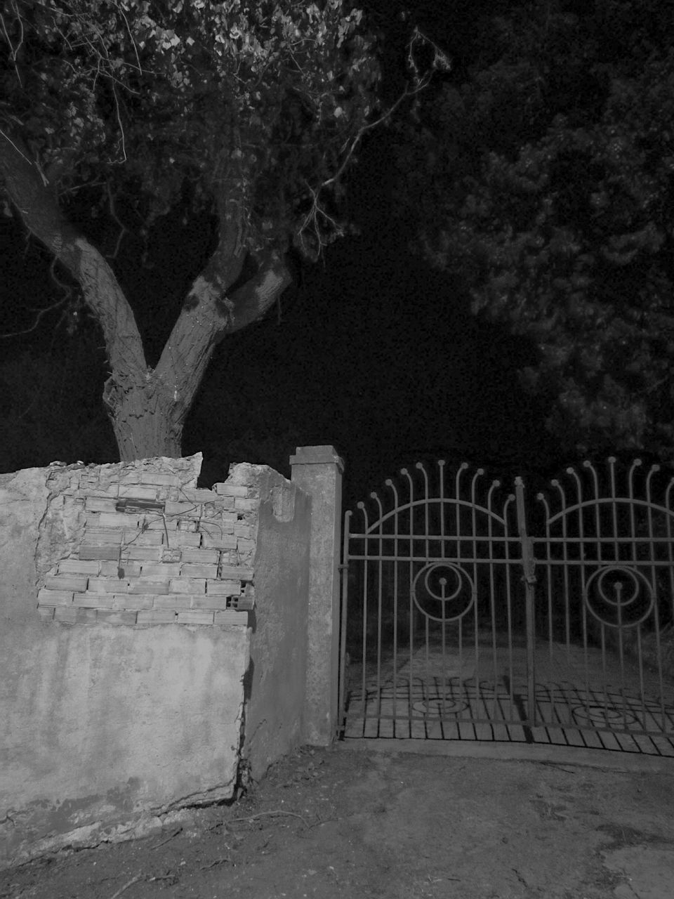 night, tree, outdoors, no people, built structure, architecture, nature, sky, close-up