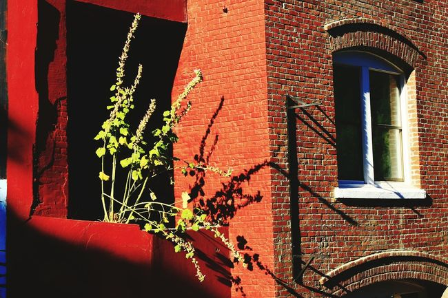 Dunsmuir C.a Brick Building Red Historic Green Art Plant A.M.Marasco Diamond Mafia Studios Diamond Mafia Photography