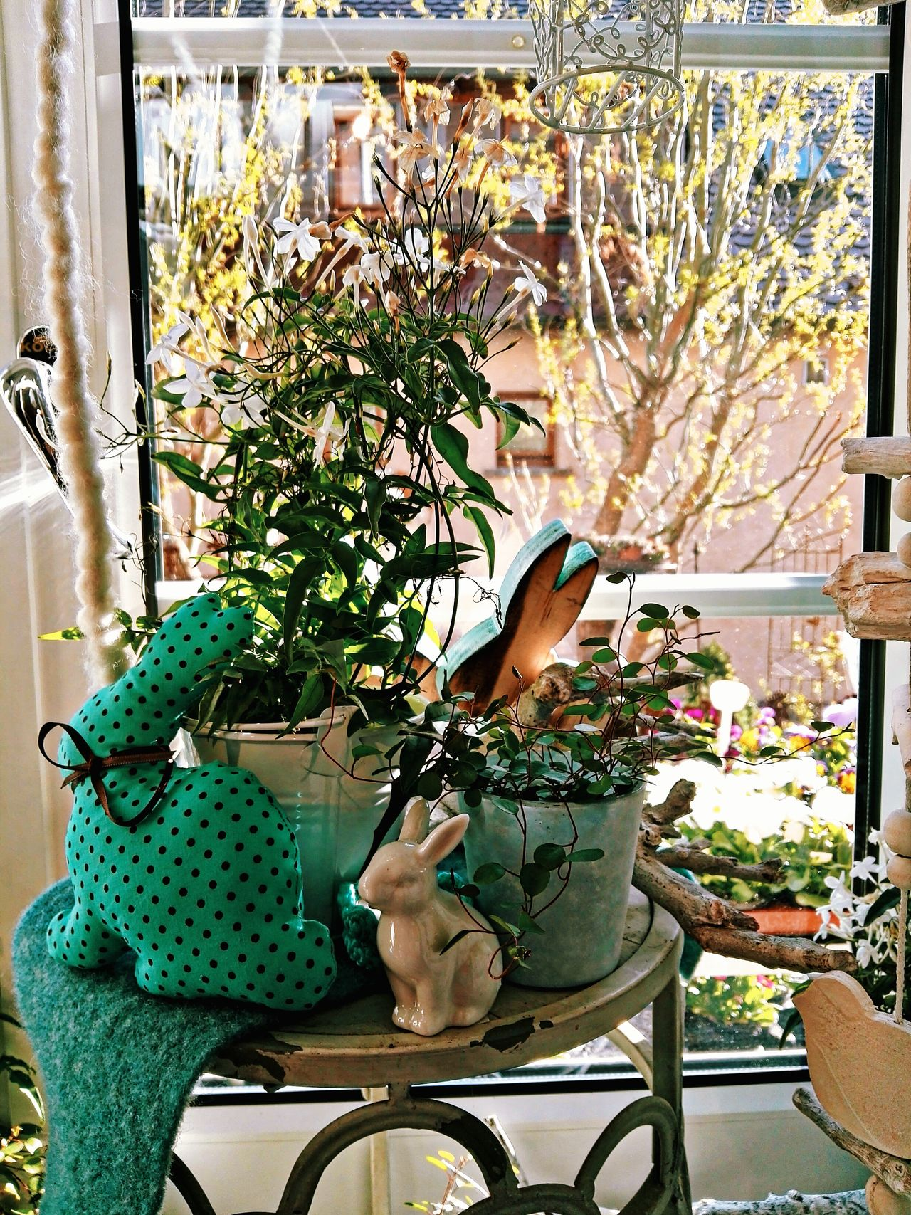 Easter decoration at home Potted Plant Growth Plant Indoors  Gardening Nature Watering Can Beauty In Nature Close-up Greenhouse Decoration Easter Decoration Easter Atmosphere Easter Home Easter Window Deco Easter Ready Easter Sunday Easter Bunny