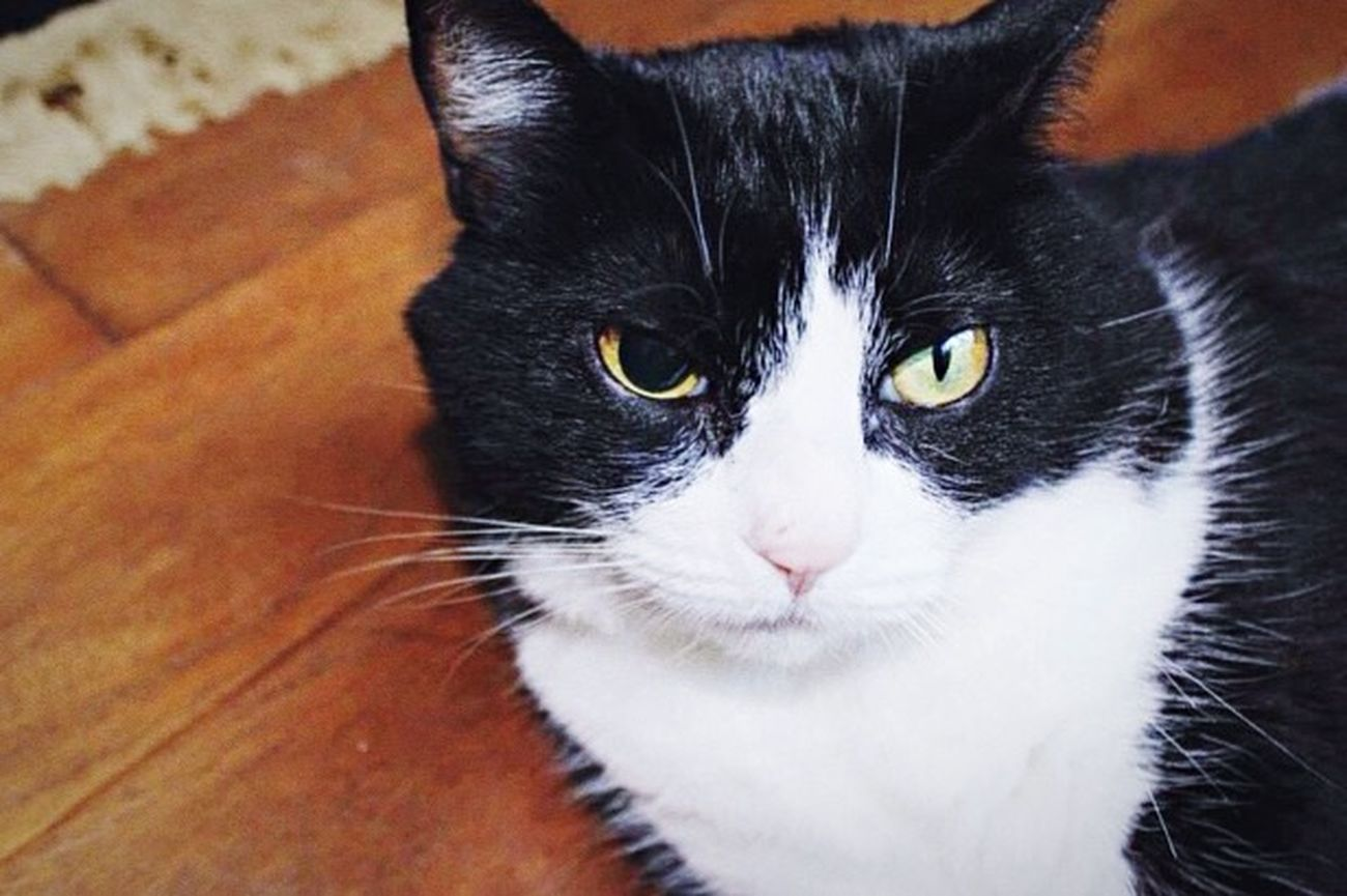 The Eye Kitty Battle Scars