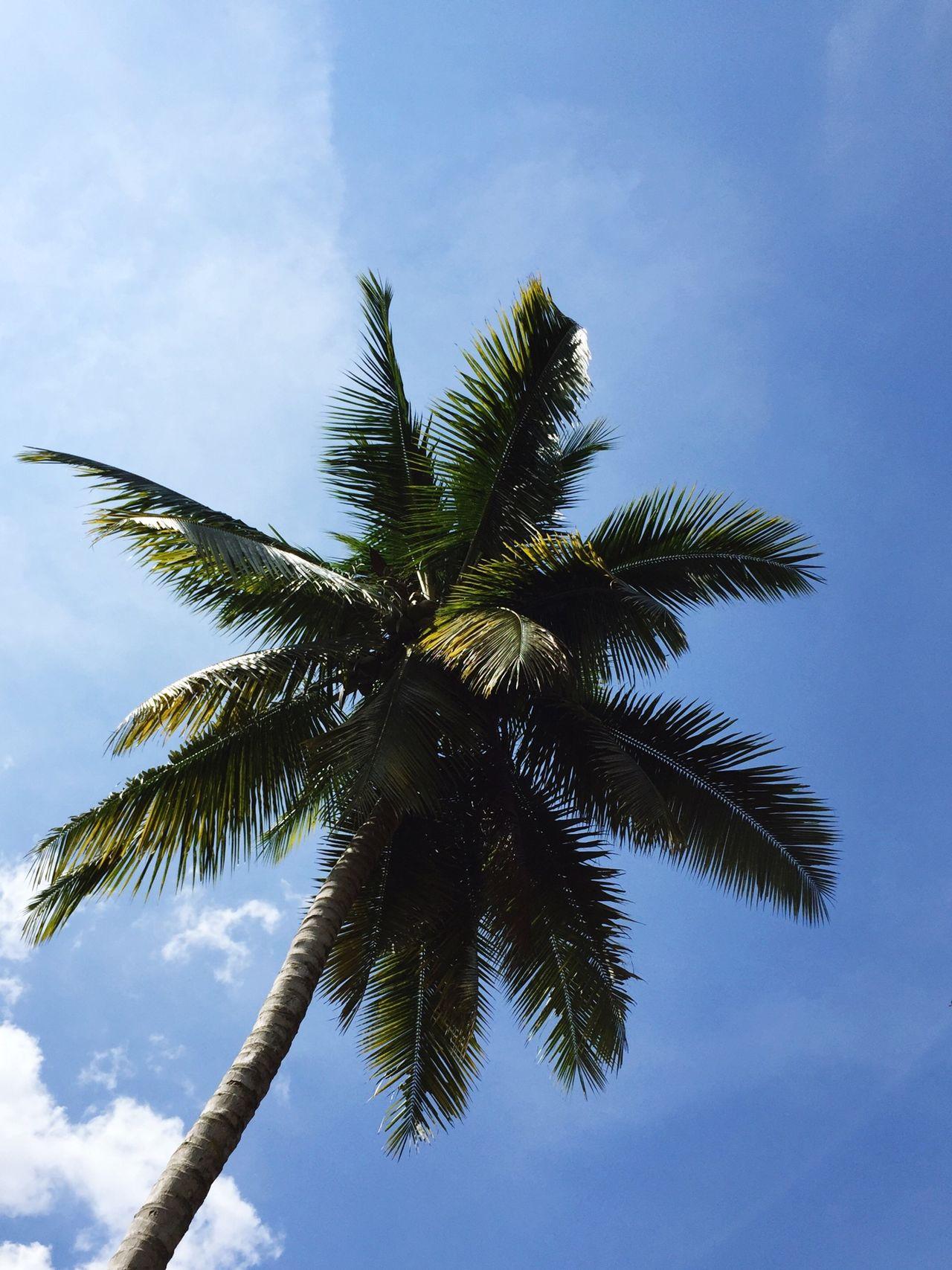 Negative Space Coconut and Skyporn Blue Sky