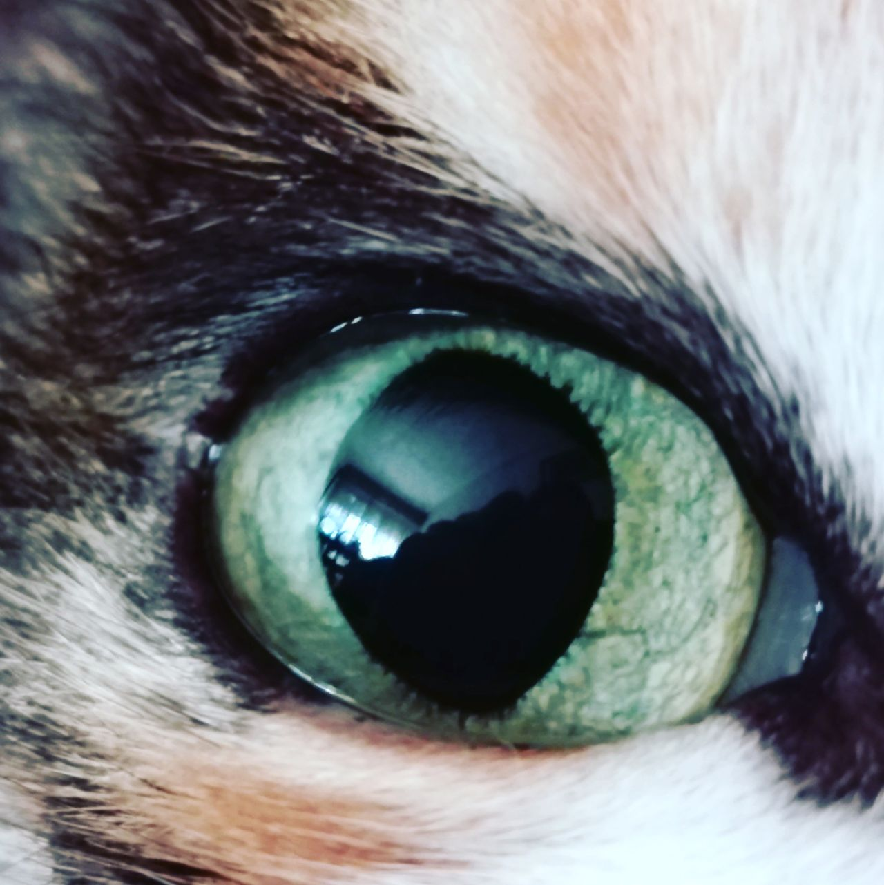 Sensory Perception Eyesight Full Frame Iris - Eye Eyelash Day Vision Cat Cateyes CatEye Cat Lovers Cat♡ Cats 🐱 Cats Of EyeEm Catoftheday Cat Watching Cat Photography Catlover
