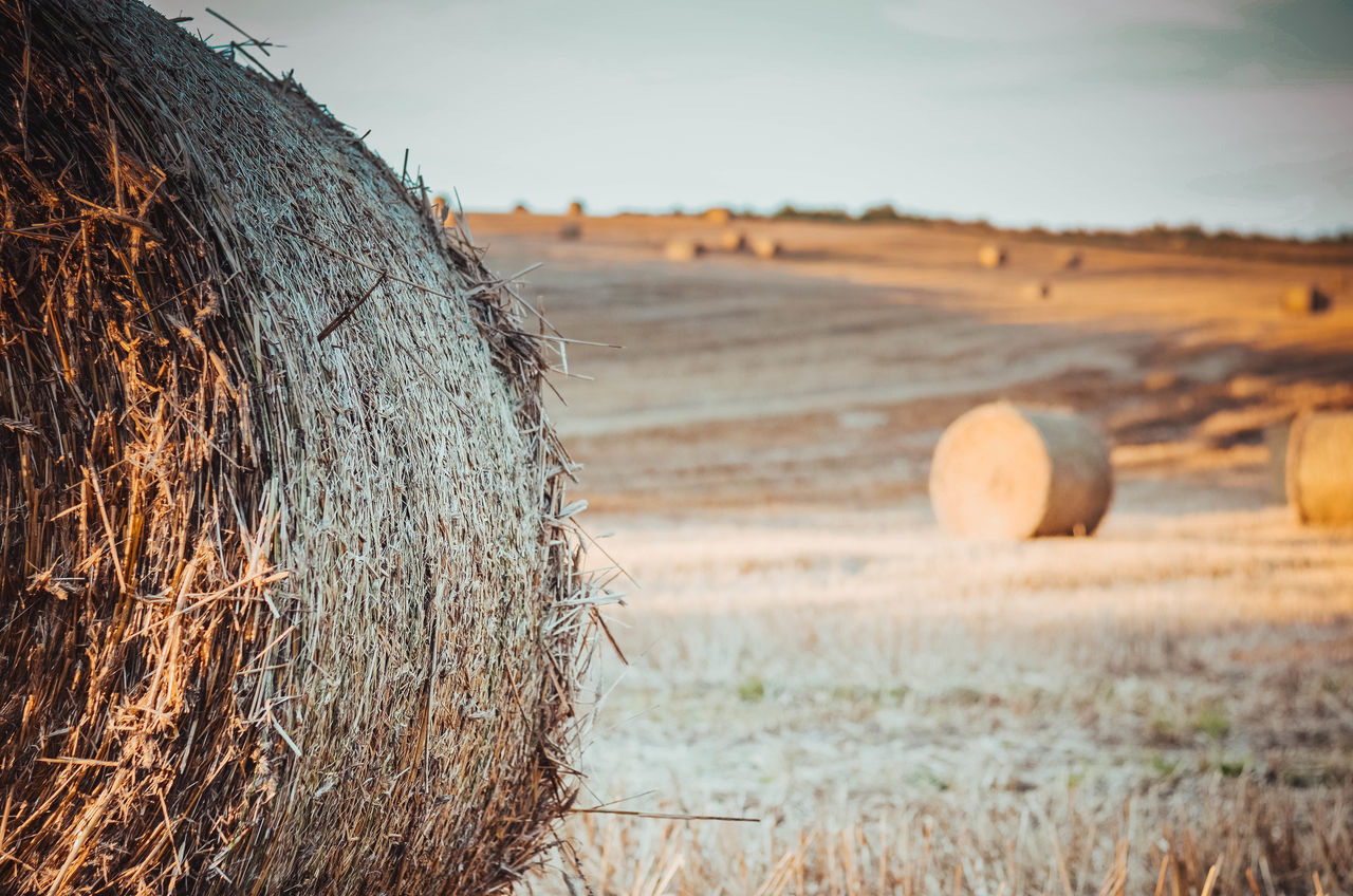 EyeEm Selects Nature Nature Photography Nikon Poland Sunlight The Week On EyeEm Agriculture Bale  Close-up Day Grass Hay Bale Kaszuby Kaszuby Eyeem Landscape Nature Nature_collection No People Outdoors Poland Eyeem Rolled Up Sky Sun Sunset