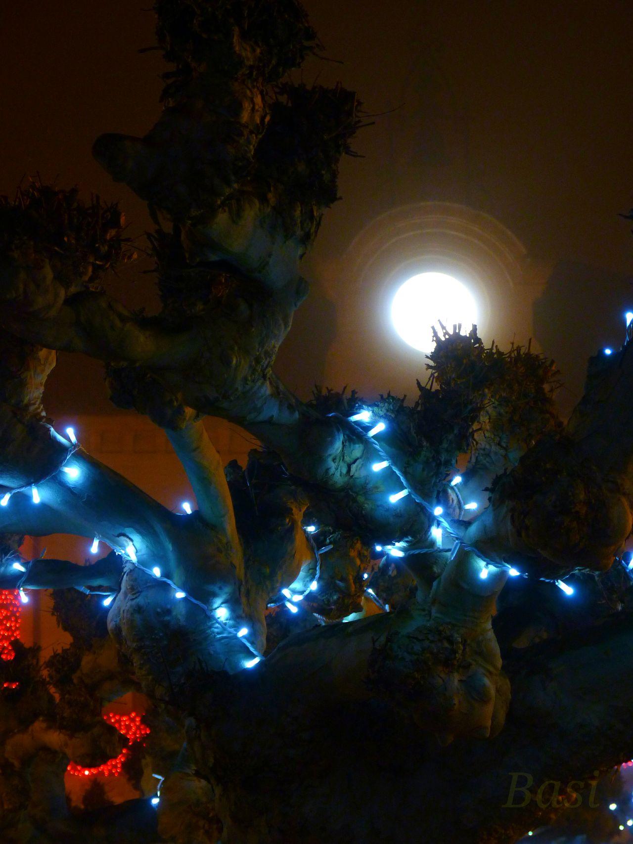 Night Tree No People Illuminated Moon Moonlight Close-up Outdoors EyeEmNewHere Bluelight