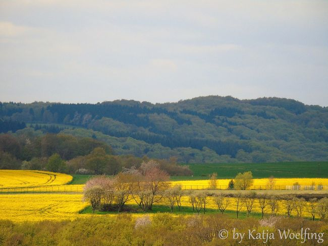 Agriculture Beauty In Nature Flower FORESTERS SEAT Idyllic Landscape No People Non-urban Scene Outdoors Raps Rapsfeld Tranquil Scene Yellow