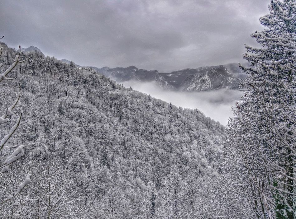 Forest Mountains Frozen Frozen Nature Snow Italy