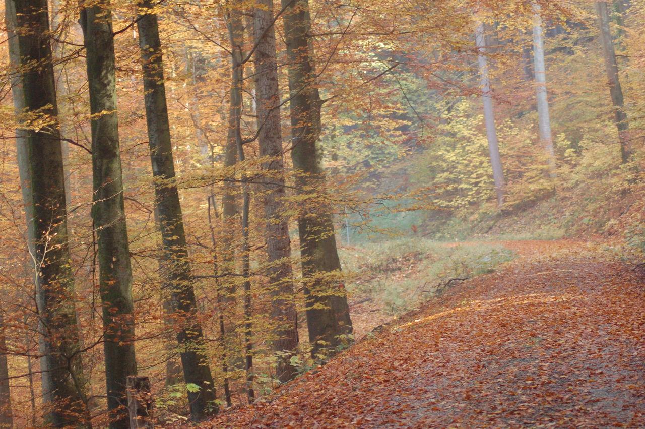 Atmosphere Autum Light Autumn Autumn Colors Blackforest Food Forest Lights Mysterious Mystical Müllheim Schwarzwald Trees View