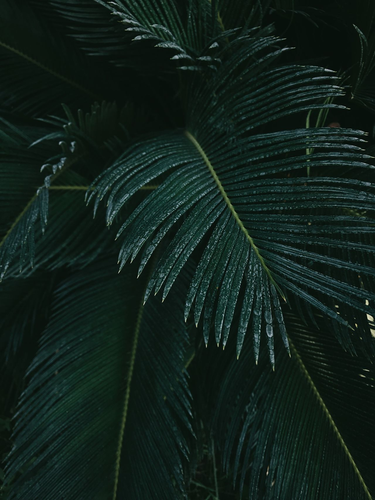 leaf Green color Nature beauty in Nature no people Freshness close-up Plant outdoors tropical fragility The Week on EyeEm