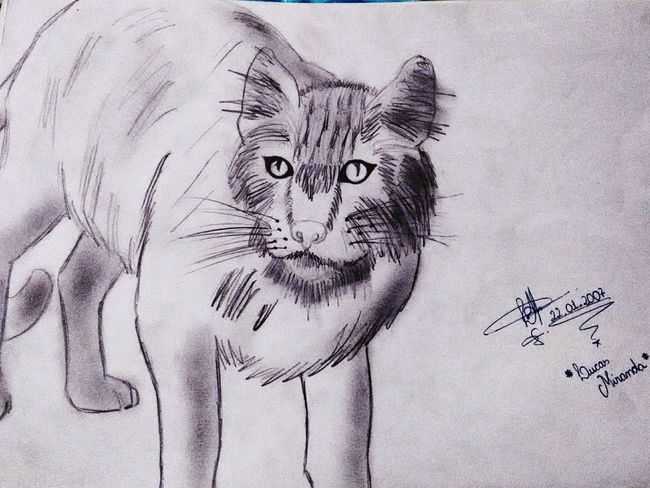 Animal_collection Animal Portrait Art Artistic Cat Lovers Cat Drawing Dibujo Desenho LM_colection