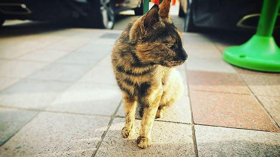 끝내 외면당함 고양이 Cat 부산 Busan 바다 일상 데일리 사진 여행 일상공유 맞팔 Sotong 미러리스카메라 Follow Followme Photo Travel Daily Southkorea