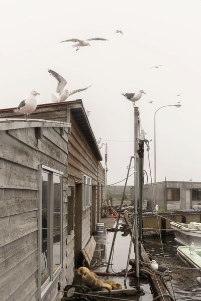 Bird No People Outdoors Built Structure Flock Of Birds Architecture Winter Flying Large Group Of Animals Day Animals In The Wild Building Exterior Water Animal Themes Sky Seagull Rebun Island Hokkaido Japan