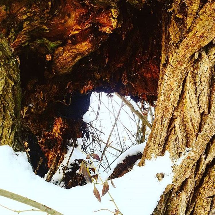 Hole in a tree..🌳🍂 Nature Natur Photooftheday Latergramm Naturephotography Photographer Tree Hole Winter Snow Baum Water Hippie Love Sun Green Liebeliebeliebe Spaziergang Spontanfoto Naturfotografie Way Strong Natureshots Naturelovers