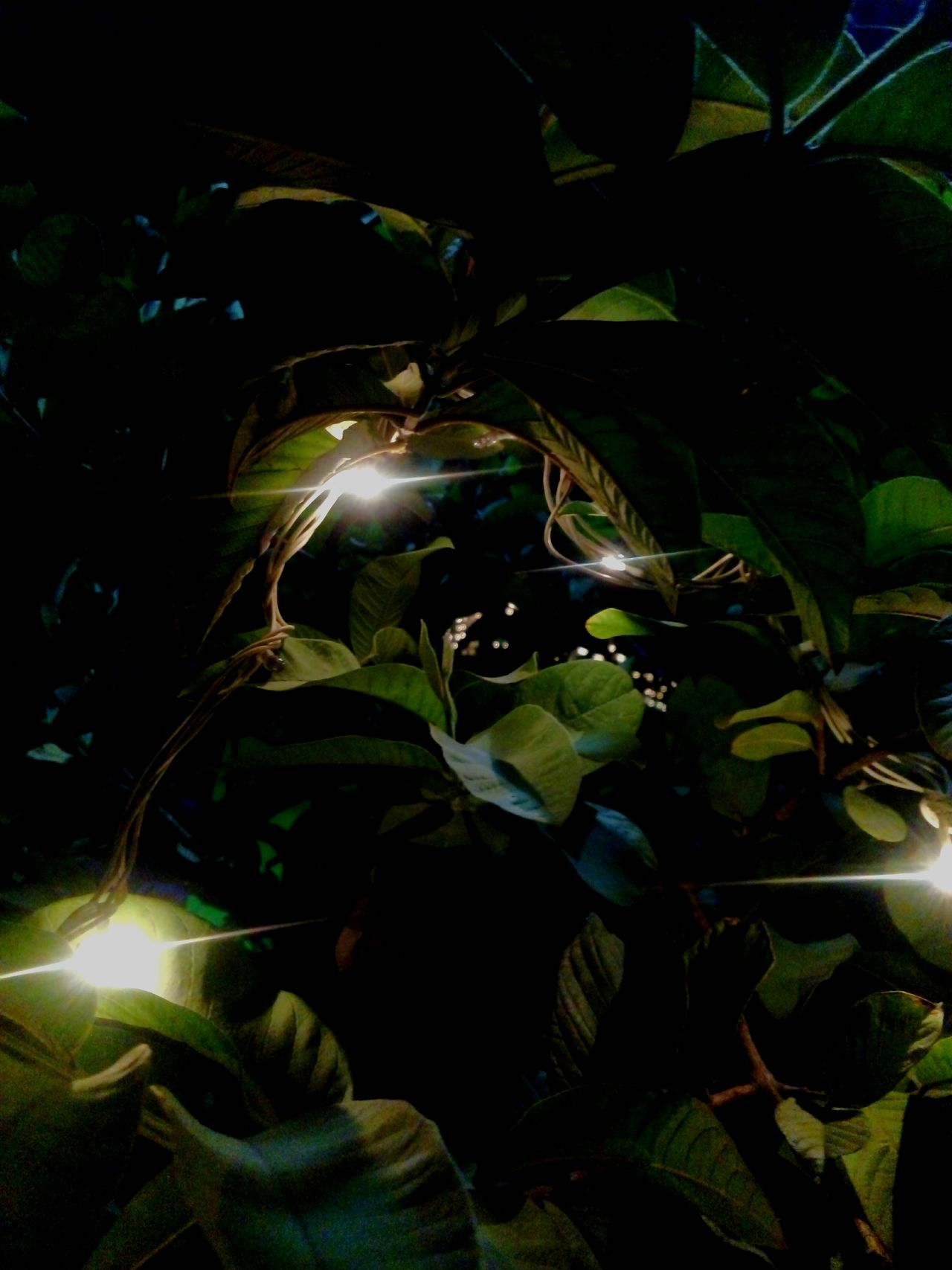 Backgrounds Beauty In Nature Black Background Close-up Full Frame Green Color Illuminated Leaf Nature Night No People Outdoors