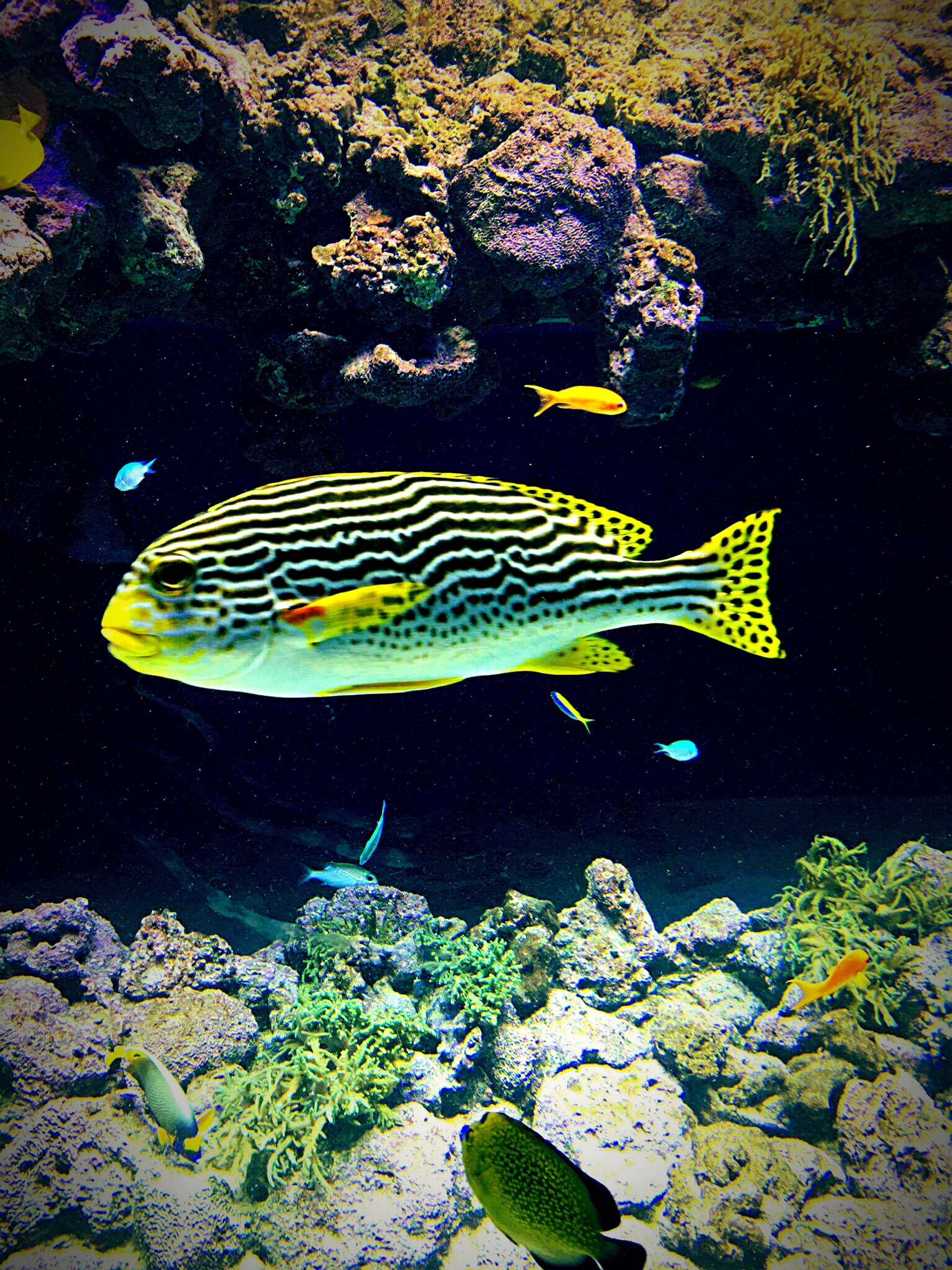 underwater, sea, water, fish, undersea, sea life, swimming, no people, beauty in nature, scenics, animals in the wild, living organism, nature, animal themes