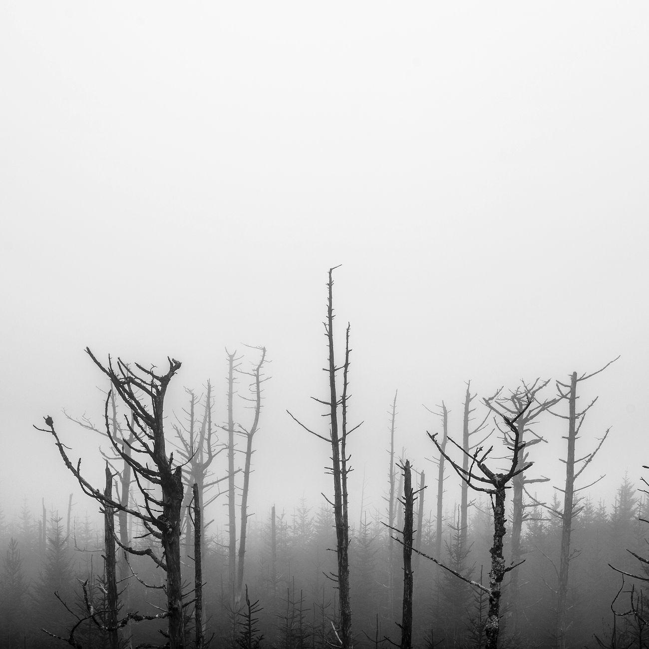 Blackandwhite Nature Landscape