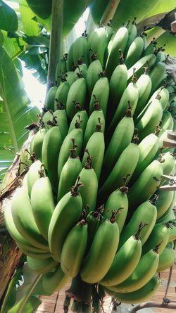 Frutas Tropicais Brasileira Fruta♥