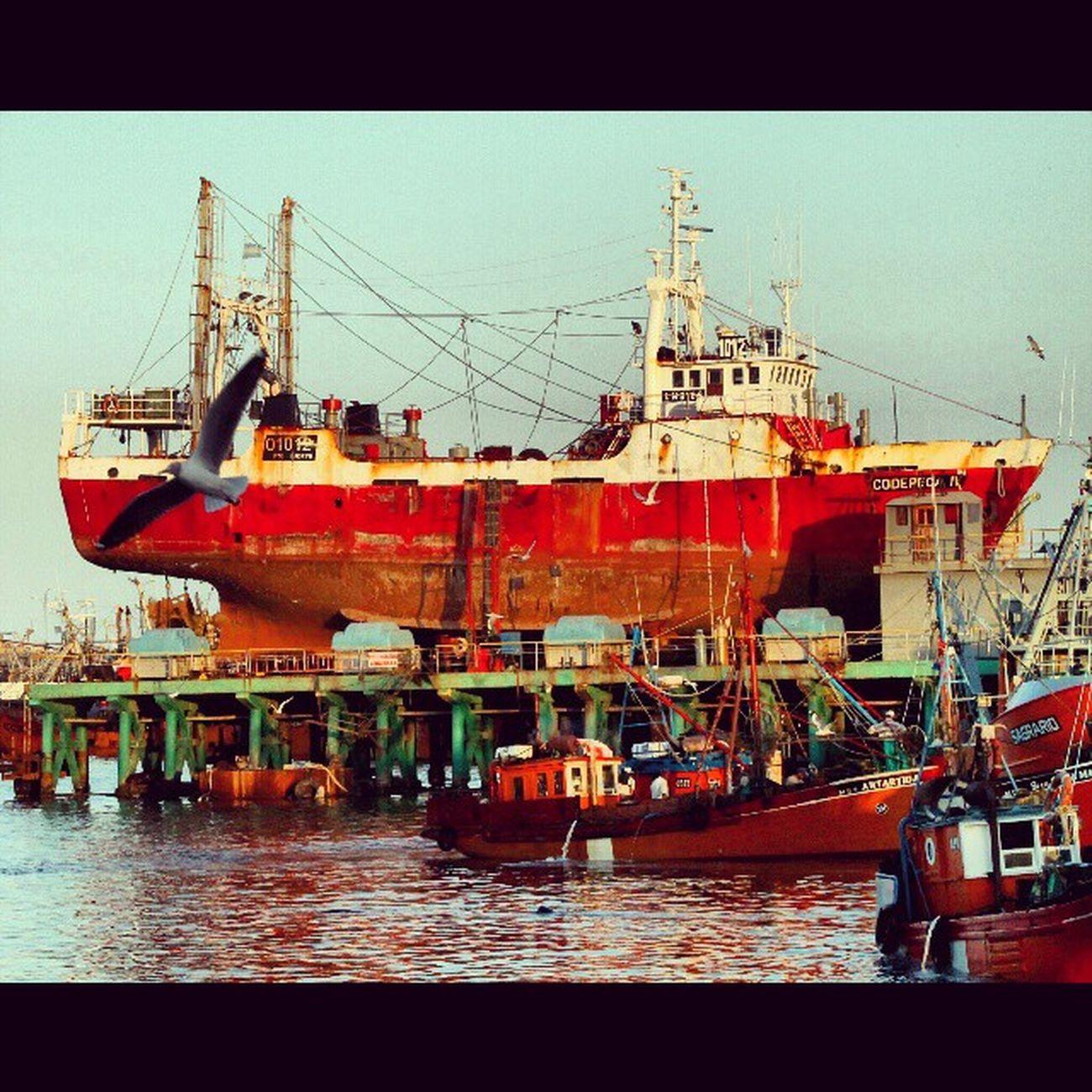 Puerto de Mar del Plata Puerto Port Harbor Gaviota Seagull Pesca Fishing Mardel
