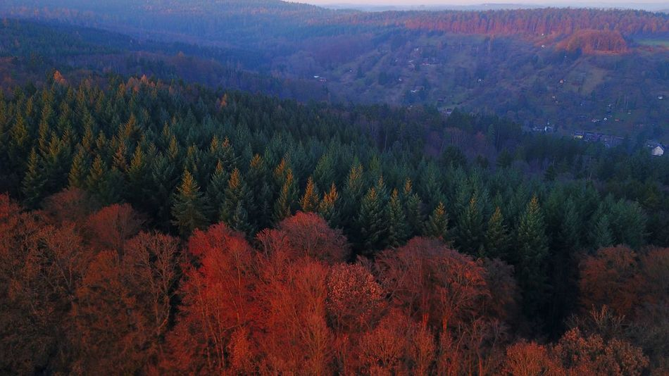 Nature Tree Beauty In Nature Growth Scenics Tranquility Forest Outdoors Tranquil Scene No People Mountain Landscape Treetop Day Drone  Dronephotography Droneshot Drones