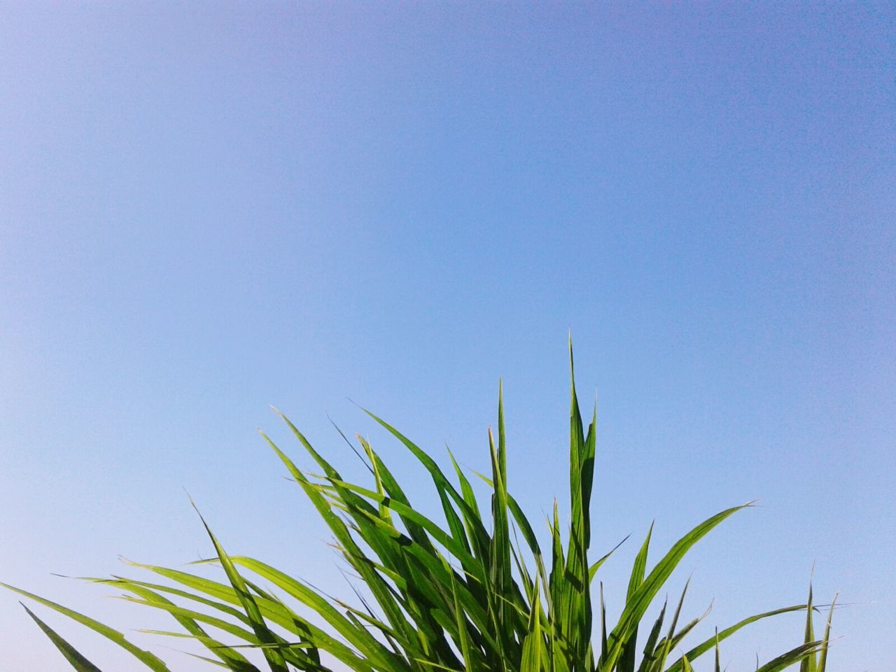 growth, blue, clear sky, plant, copy space, nature, no people, outdoors, day, sky, freshness