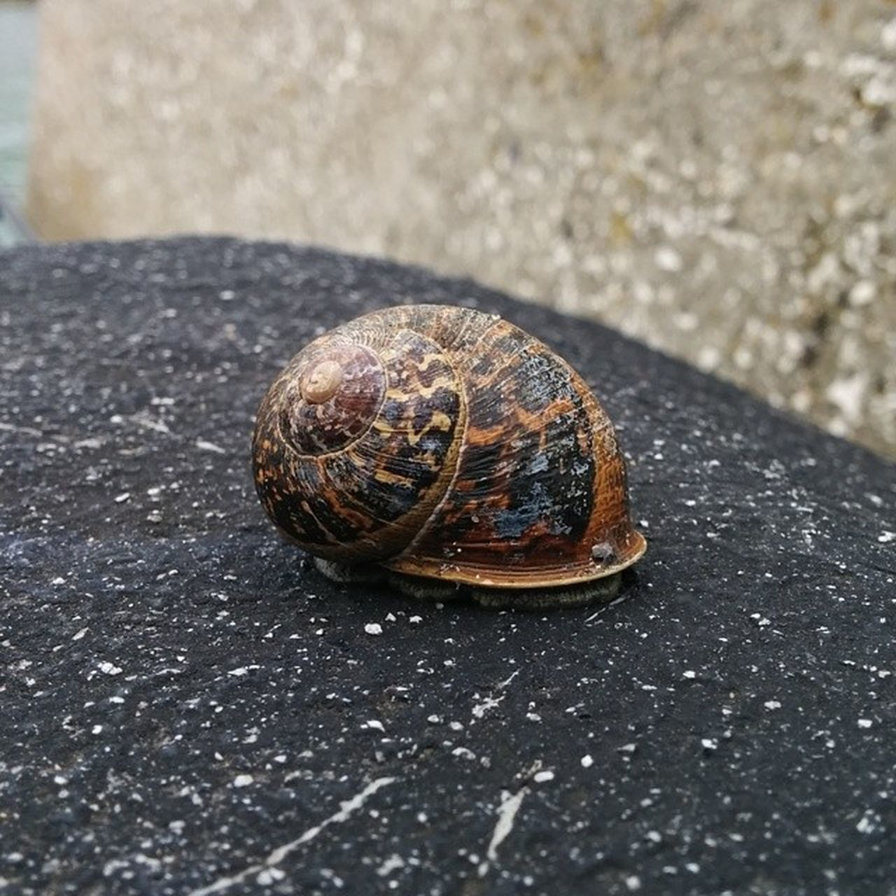 Snail Portmuck Ireland