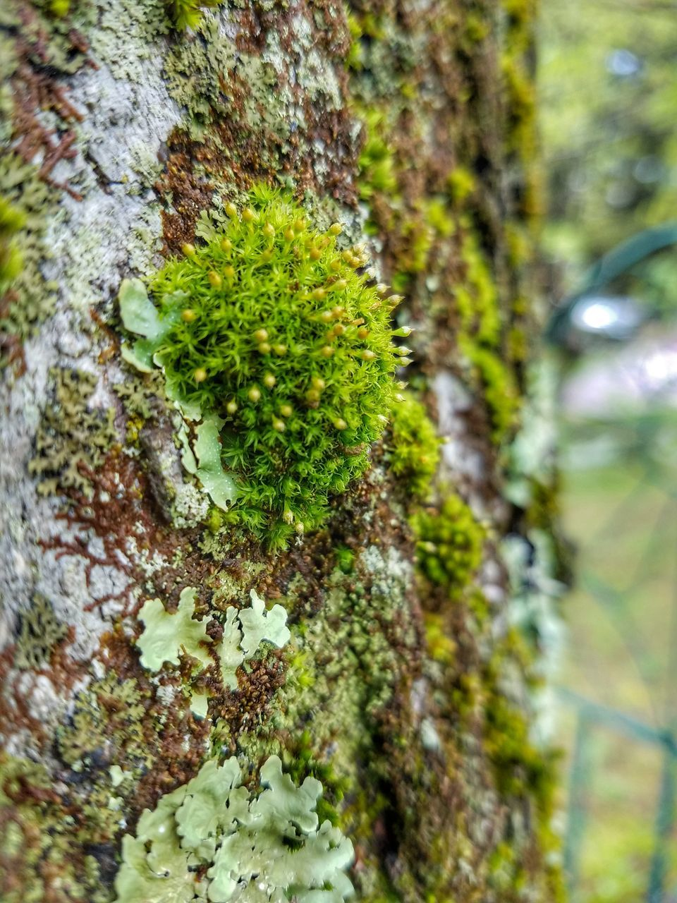 growth, nature, moss, lichen, plant, no people, tree trunk, green color, day, close-up, outdoors, beauty in nature, tree, fungus