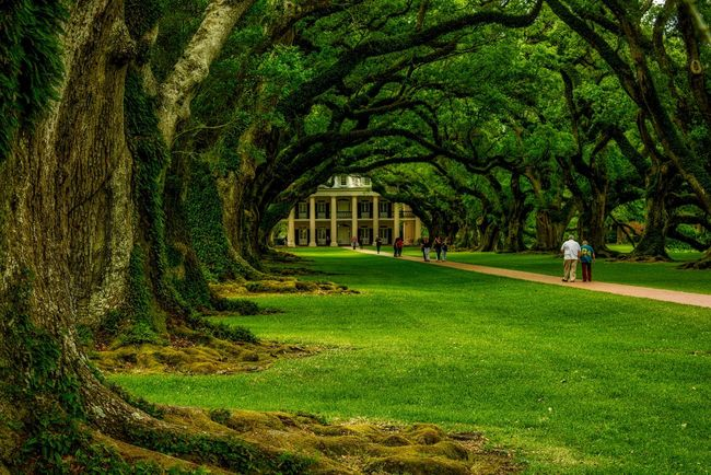 Summer New Orleans NOLA Mississippi River Plantation Louisiana Antebellum Oak Oak Trees