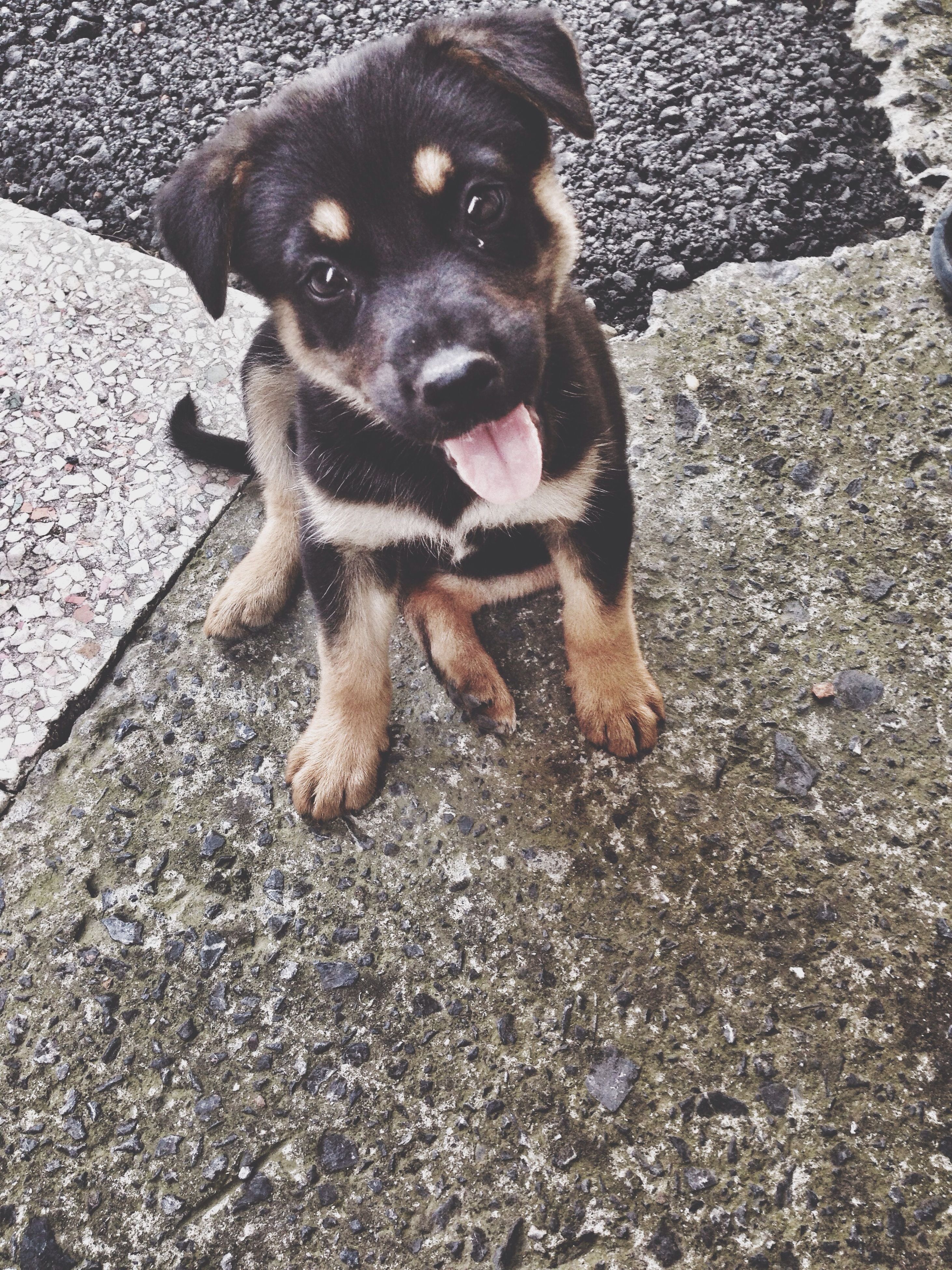 pets, dog, animal themes, one animal, domestic animals, mammal, high angle view, looking at camera, portrait, sitting, street, canine, pet collar, day, full length, outdoors, relaxation, puppy, sunlight, black color