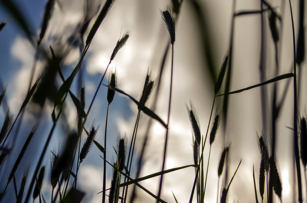 EyeEm Selects Nature Growth Outdoors No People Beauty In Nature Plant Close-up Backgrounds Sky Day Flower Grass Fragility Inspiration Wonderlust Freedom Germany
