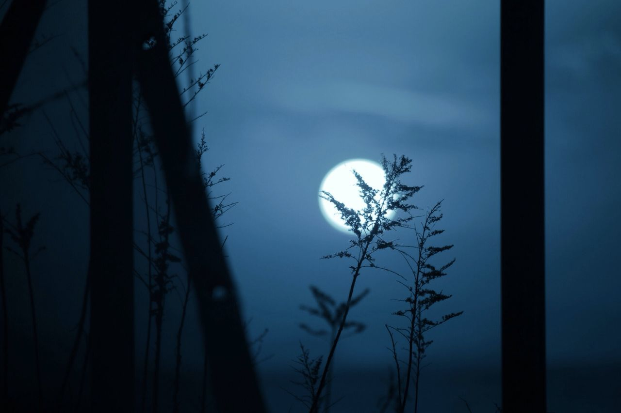 Beautiful stock photos of night, Beauty In Nature, Growth, Moon, Nature